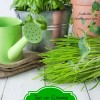 Tips on Growing an Indoor Herb Garden