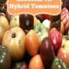 Heirloom vs. Hybrid Tomatoes-Tomatoes from Seed
