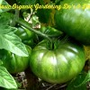 Organic Gardening Do's & Don'ts