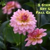 5 Steps to Set Up a Fall Garden