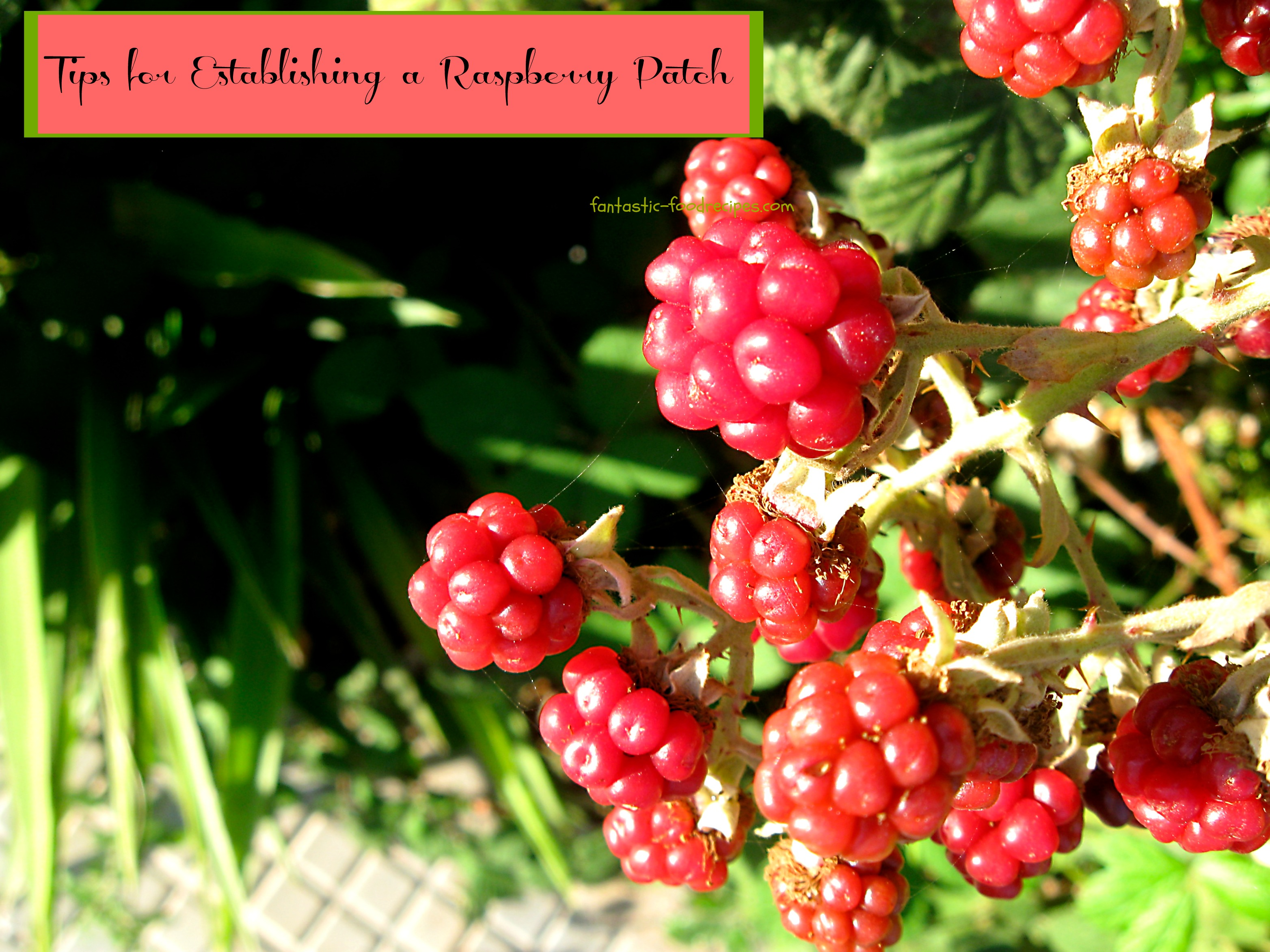 Tios for Establishing a Raspberry Patch