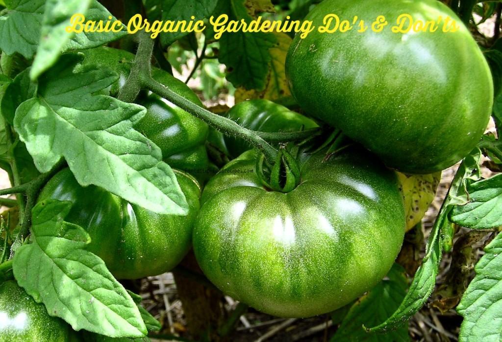 Basic Organic Gardening Do's and Don'ts
