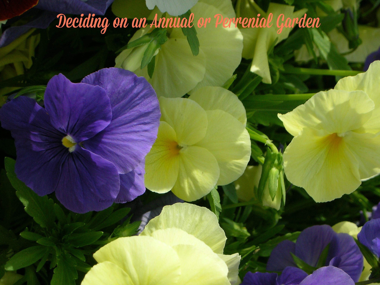 Deciding on an Anuual or Perrenial Garden