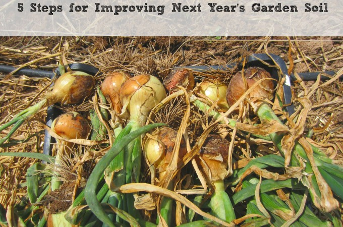 5 Steps for Improving Next Year's Garden Soil