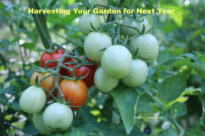 Harvesting Your Garden for Next Year