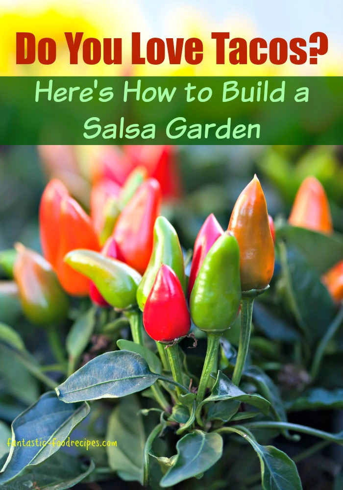 Learn How to Build a Salsa Garden