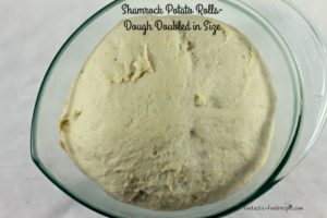 Shamrock Potato Rolls- Dough Double in Size